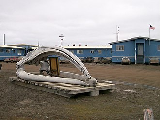 Iḷisaġvik College - Bowhead Whale skull in front of Iḷisaġvik College main building