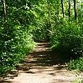 Im Mutterstädter Wald - panoramio (2).jpg