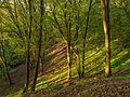Im Wald des Nationalpark Unteres Odertal.jpg