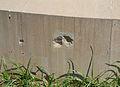 Impactes de metralla de la Guerra Civil al monument a Canalejas, Alacant.JPG