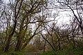 In the forest near Ubezhenskaya - panoramio (18).jpg