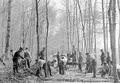 Infanterie bei Verbesserung von Waldwegen - CH-BAR - 3238484.tif