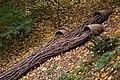 Installation at The Morrison Woodland Garden (6618096483).jpg