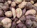 Ipomoea batatas - Tubers.jpg