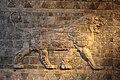 Iraq, babilonia, regno di nabucodonosor II, rivestimento delle mura in mattonelle invetriate, leone, 604-562 ac ca. 02.JPG