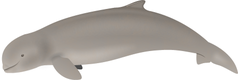 Der Irawadidelfin
