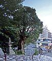 Isaniwa jinja shrine , 伊佐爾波神社 - panoramio (3).jpg