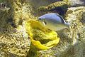 Istanbul Aquarium-2.JPG