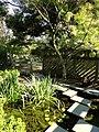 J. C. Raulston Arboretum - DSC06216.JPG
