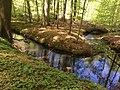 Jakobsweg im Frühling-Quellental Bad Doberan.jpg