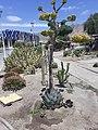 Jardín Japonés Antofagasta.jpg