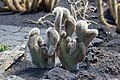Jardín de Cactus - Lanzarote - J05.jpg