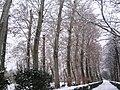 Jardín de la Isla nevado - panoramio - isol.jpg