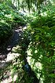 Jardin Alpin @ Jardin des Plantes @ Paris (28180259986).jpg