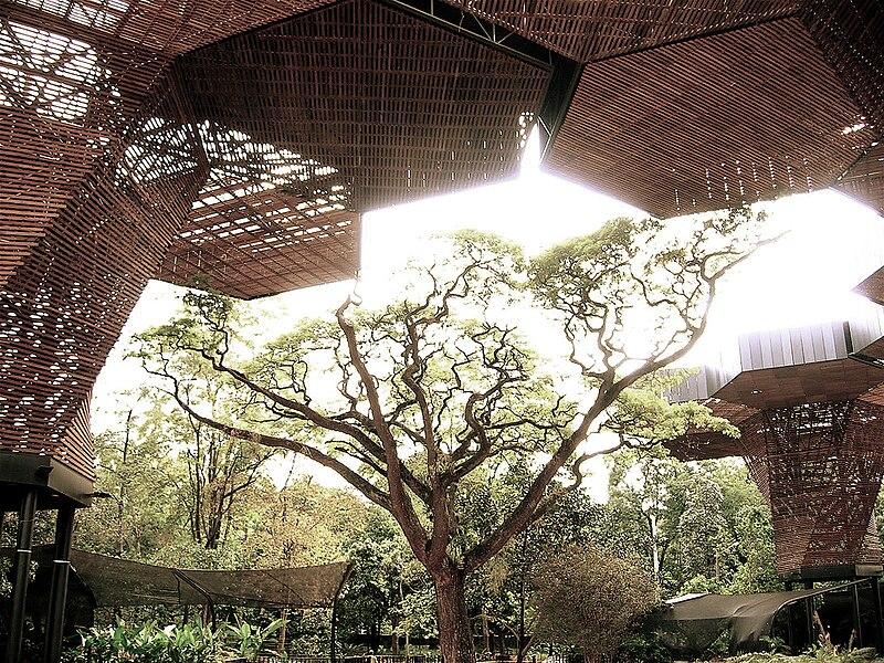 File jardin botanico orquideorama arbol for Arboles jardin botanico