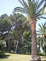 Jardins del Mirador de l'Alcalde (Montjuïc - Barcelona) 17.JPG