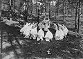 KKK-1922-Cedar Lake area-Minneapolis.jpg