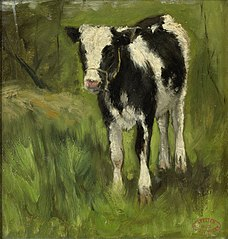 Calf, spotted black and white