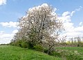 Kalletal - 2015-05-02 - LIP-013 Aberg-Herrengraben (62).jpg