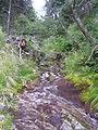 Kamenitý potok.JPG