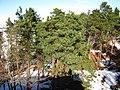 Kapas - panoramio.jpg