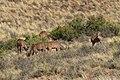 Karoo National Park 2014 01.jpg