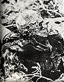 Katyn massacre 2.jpg