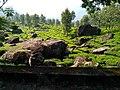 Kerala Munnar diaries 08.jpg