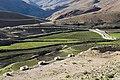 Kibber Agri Spiti Himachal Jun18 D72 7258.jpg