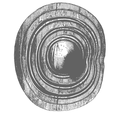 Kiltubrid-Alder-wooden-shield-Ireland2.png
