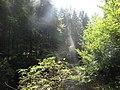 Kláštorská roklina, Slovenský Raj (agost 2012) - panoramio (5).jpg