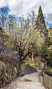 Klagenfurt Villacher Vorstadt Botanischer Garten Sal-Weide 05042018 2858.jpg