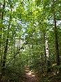 Klingenberg. LSG Tal der Wilden Weißeritz 021.jpg