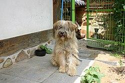 Korea-Jeonju-Sapsal dog in front of a Hanok Village-01.jpg