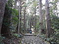 Kumano Kodo pilgrimage route Daimon-zaka World heritage 熊野古道 大門坂04.JPG
