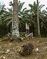 Kunak Sabah Mostyn-Oil-Palm-Museum-02.jpg