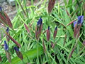 Květy 8022.jpg