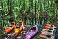 Kyaking in the Jungle - panoramio.jpg