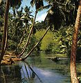 La Digue swamp.jpg