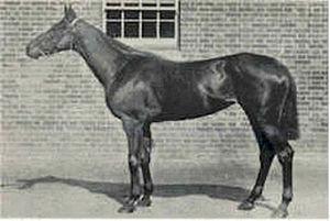 La Fleche (horse) - La Fleche in training circa 1892