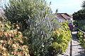 La Palma - Villa de Mazo - Camino Monte de Pueblo - Molino de Mazo - Garden 05 ies.jpg