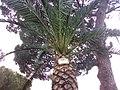 La palma in affitto - panoramio.jpg