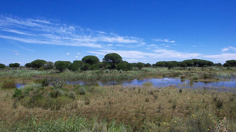 Lagunas del Acebuche, Doñana