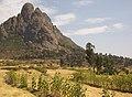 Landscape With Sunflowers, Tigray Region, Northern Ethiopia (3133343323).jpg