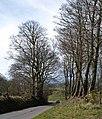 Lane at Beggar's Bush - geograph.org.uk - 748462.jpg