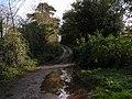 Lane passing Hayne House - geograph.org.uk - 1582876.jpg
