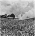 Larderello, Italy. Across the fields of corn the steamlines lead to the power plant - NARA - 541723.tif