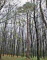 Las trzeboś wydrze 1.jpg