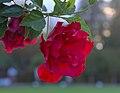 Last flowers - Flickr - stanzebla.jpg