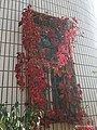 Later Autumn Window Series- Climbing around, the red leaves.jpg